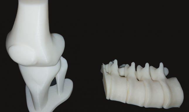 Genoux et vertèbre en 3D